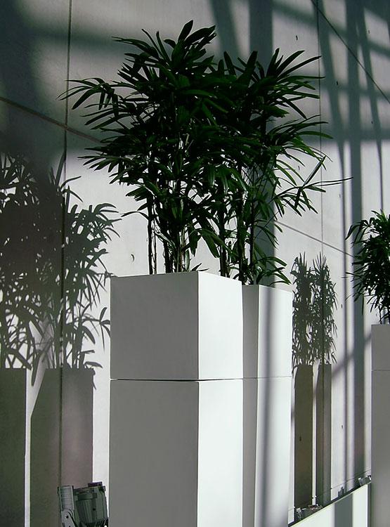 Pflanzen in weißen Stelen