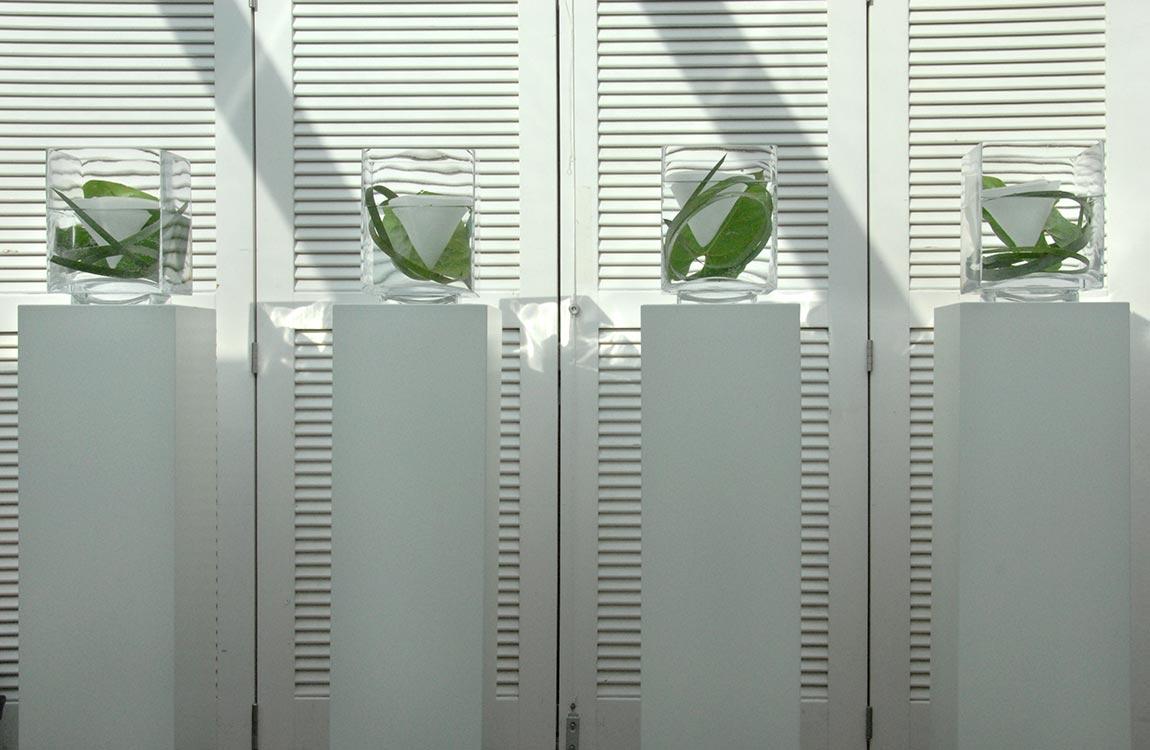 Weiße Säulen mit eleganten Glasvasen
